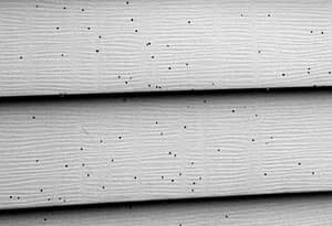 Its not fly poop. Its Artillery fungus on siding cleaning
